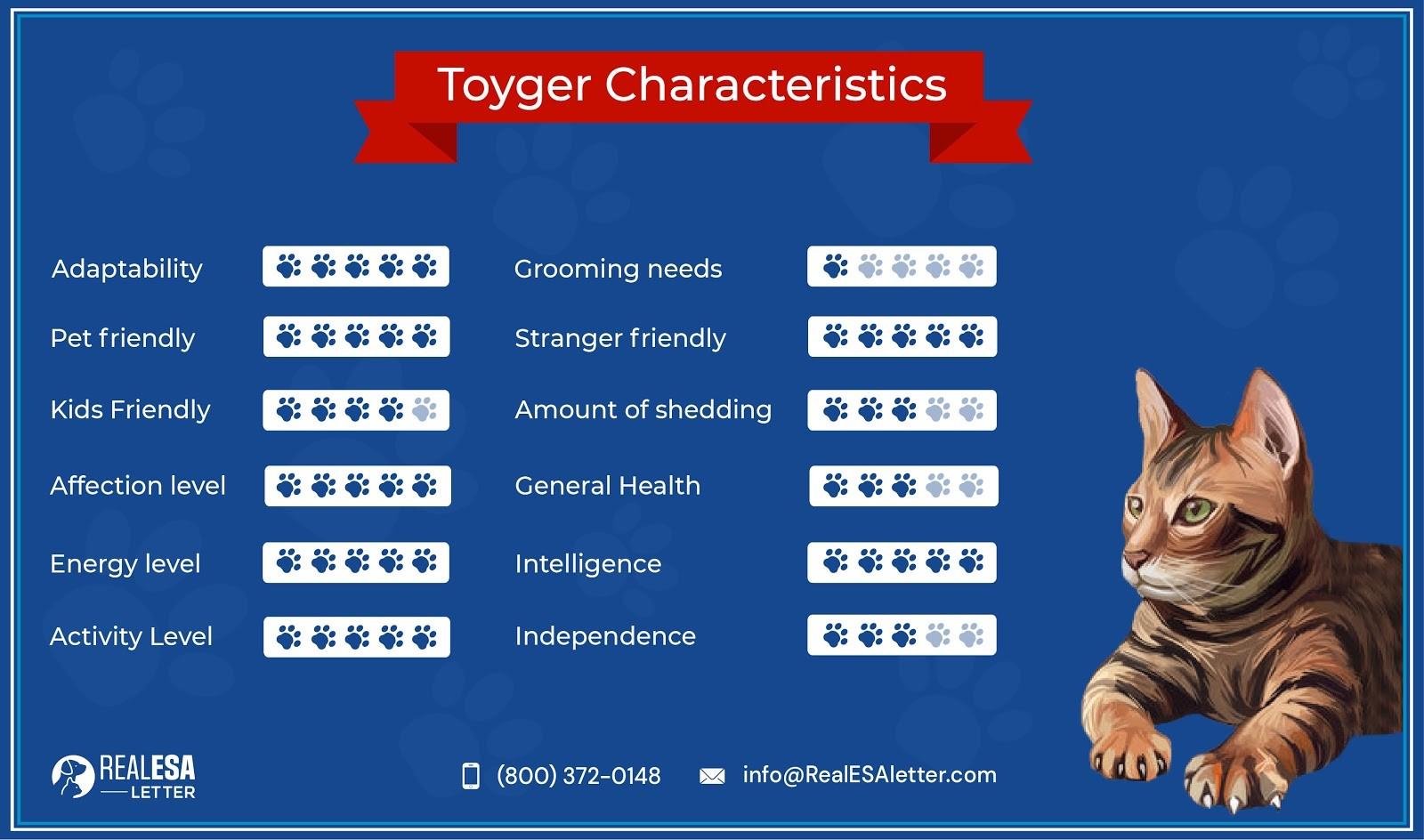Toyger Characteristics