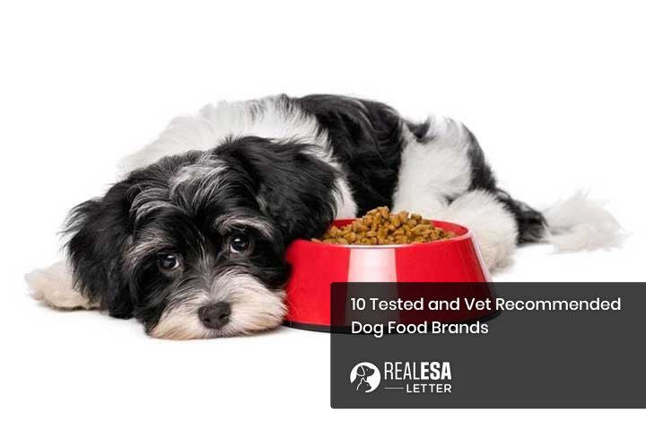 10 Tested and Vet Recommended Dog Food Brands
