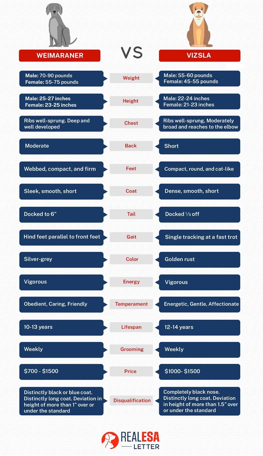 weimaraner vs. vizsla