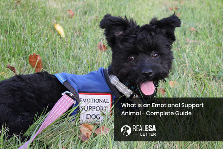 What is an Emotional Support Animal - Complete Guide